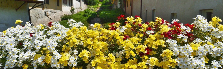 Le immagini più belle di Levico Terme: fatti un'idea di ciò che ti aspetta quando ci raggiungerai in questo piccolo angolo di paradiso.