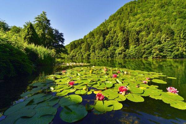 Lago di Levico Terme