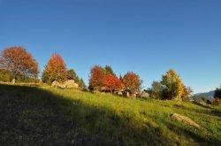 Autunno in Trentino: caldi colori e squisiti sapori!