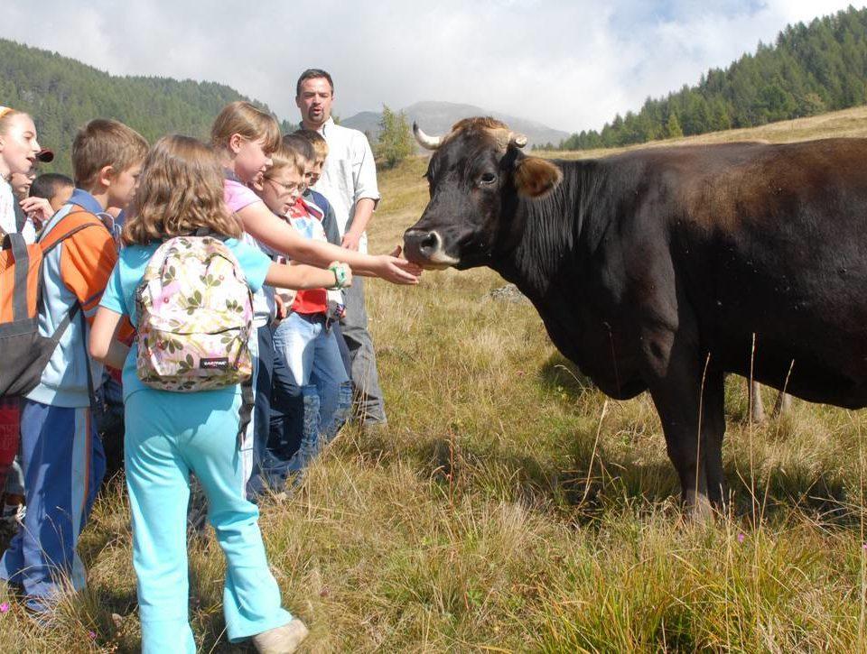Con la famiglia in Trentino: Levico Terme   LevicoTerme.it