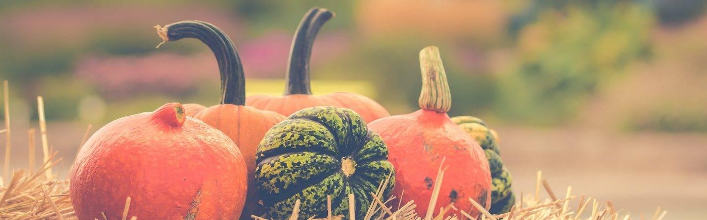 Levico Terme si tinge si arancio: le zucche in tutte le loro sfaccettature, laboratori tematici, dimostrazioni di cucina e intrattenimento.
