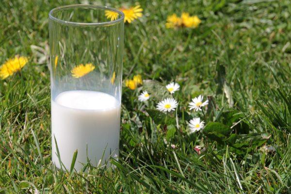 Festival von Milch und Wolle